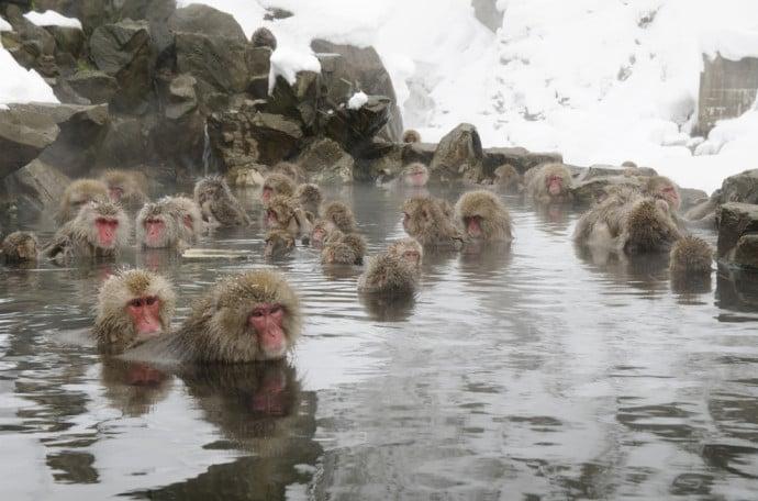 CNY monkeys