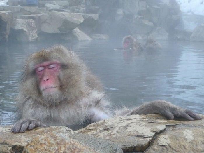 Glam monkey