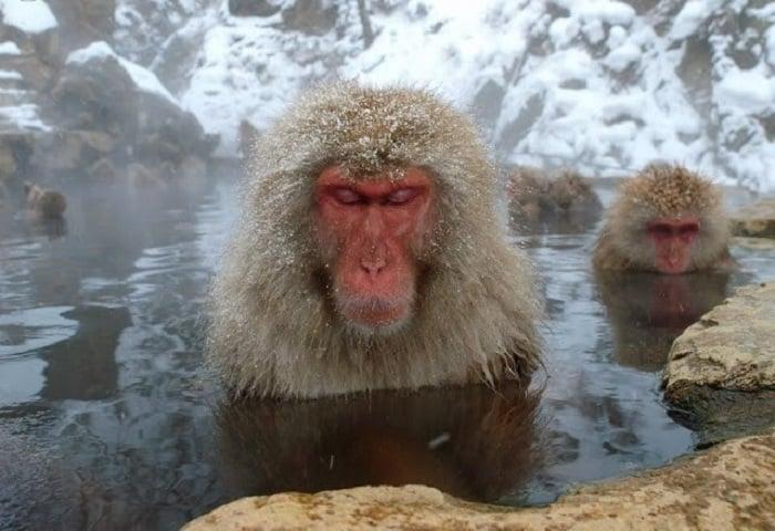 angry single monkey