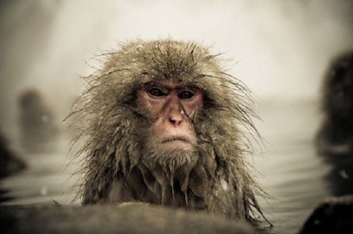 cui looking monkey
