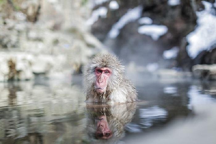grandma monkey
