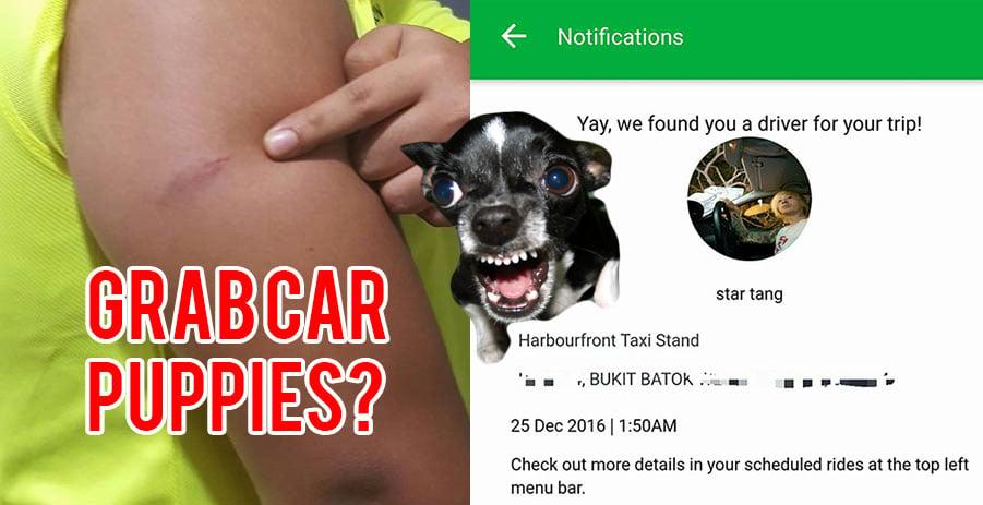 Grabcar-puppy-attack
