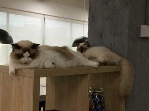 cats-hdb
