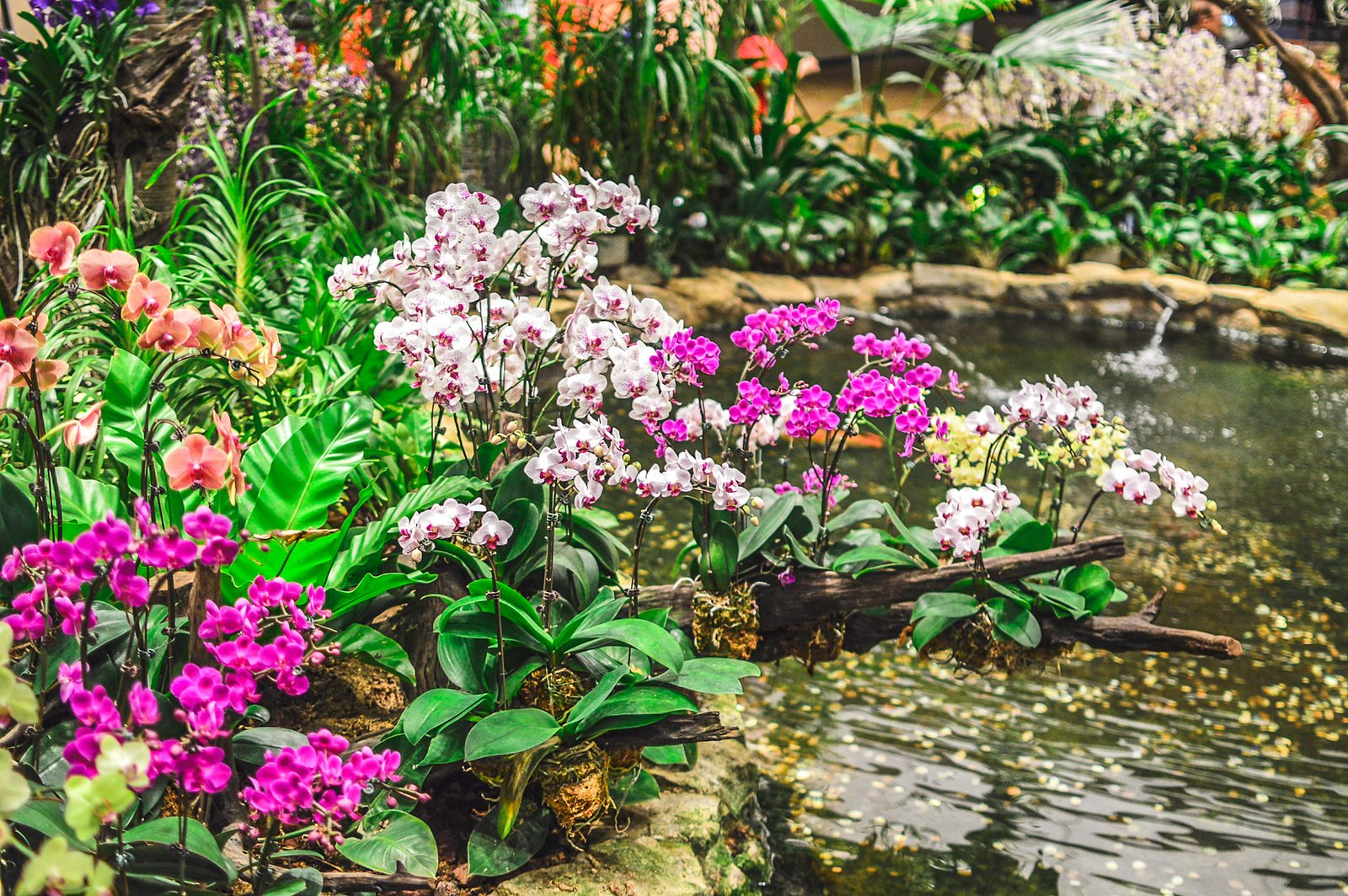 changi airport orchid garden