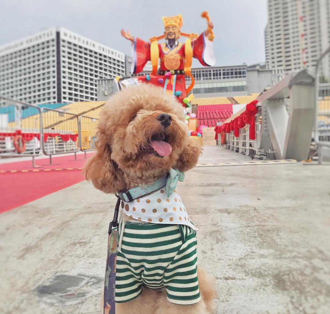 12 Dogs That Were Paw-sitively Adorable This Chinese New Year