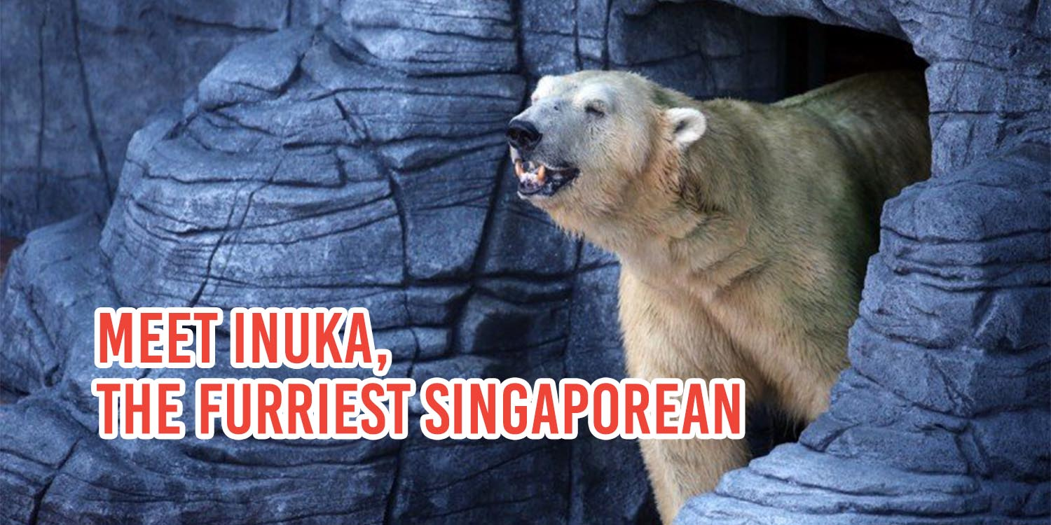 A Tribute To Inuka, The First Polar Bear Born In The Tropics
