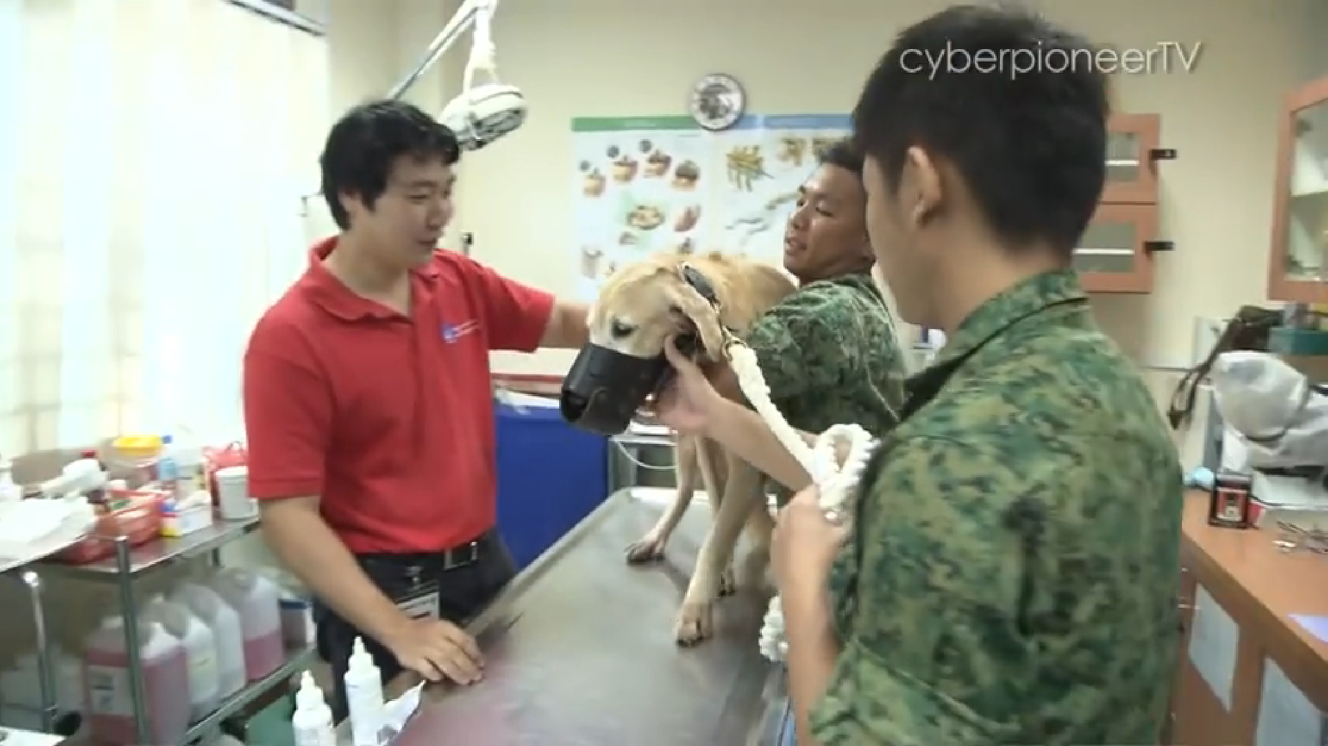11 Mindef Dogs Who Have Orded Are Up For Adoption And Seeking Loving