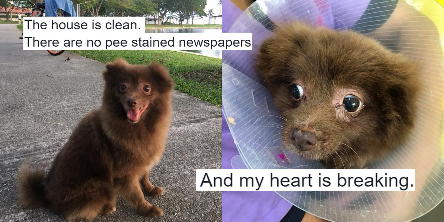 Woman Exposes Cruelty Of Singapore's Puppy Mills In
