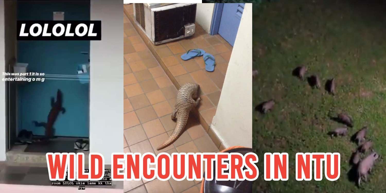 5 Wild Animal Sightings In Pulau NTU That Are Signs It's