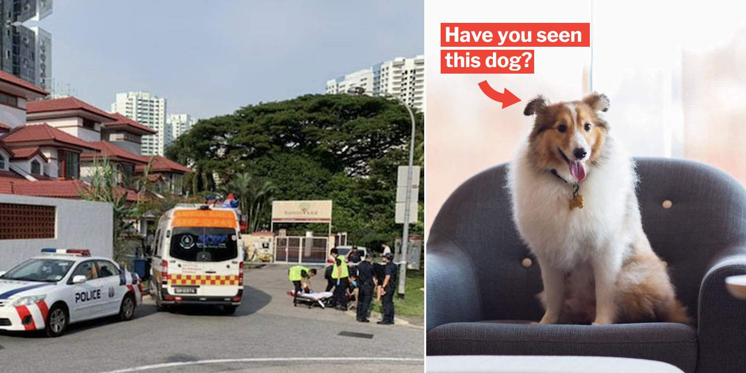 Platinium Dogs Club Drama Intensifies With Car Accident
