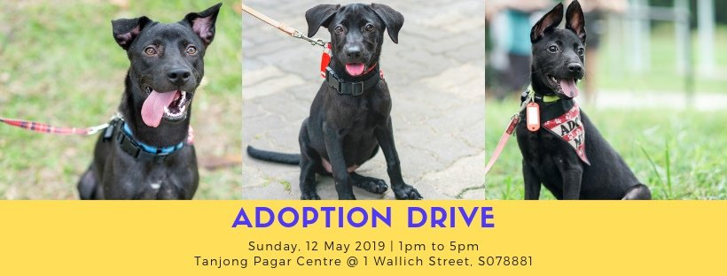 SOSD Dog Adoption Drive On 12 May Lets You Give Dogs A Fur