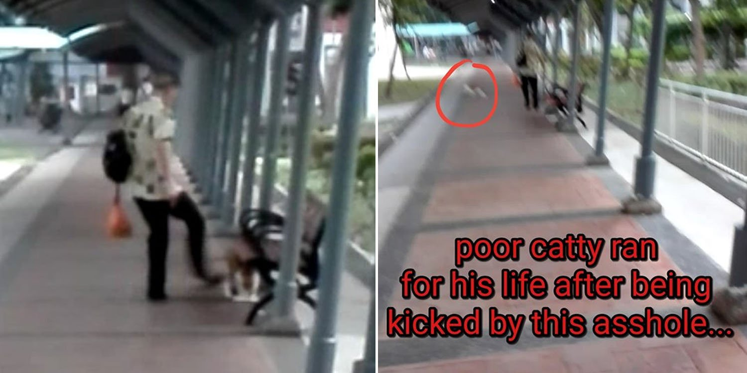 Old Man Allegedly Kicks & Throws Stones At Cats In Marsiling