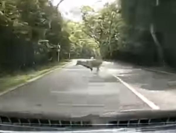 Deer at mandai