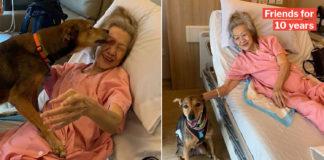 Lady Reunites Doggo Cover Photo