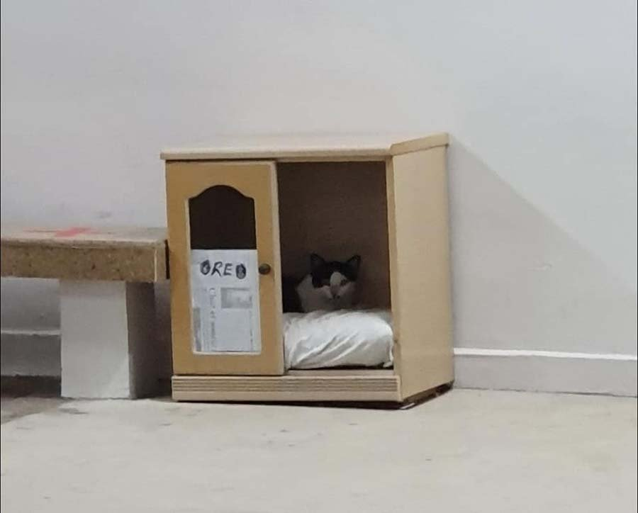 cat beds for stray cats 2