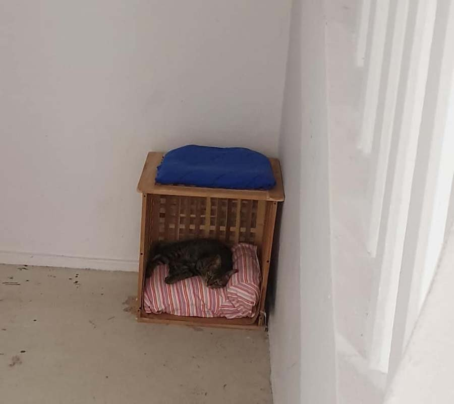 cat beds for stray cats 3