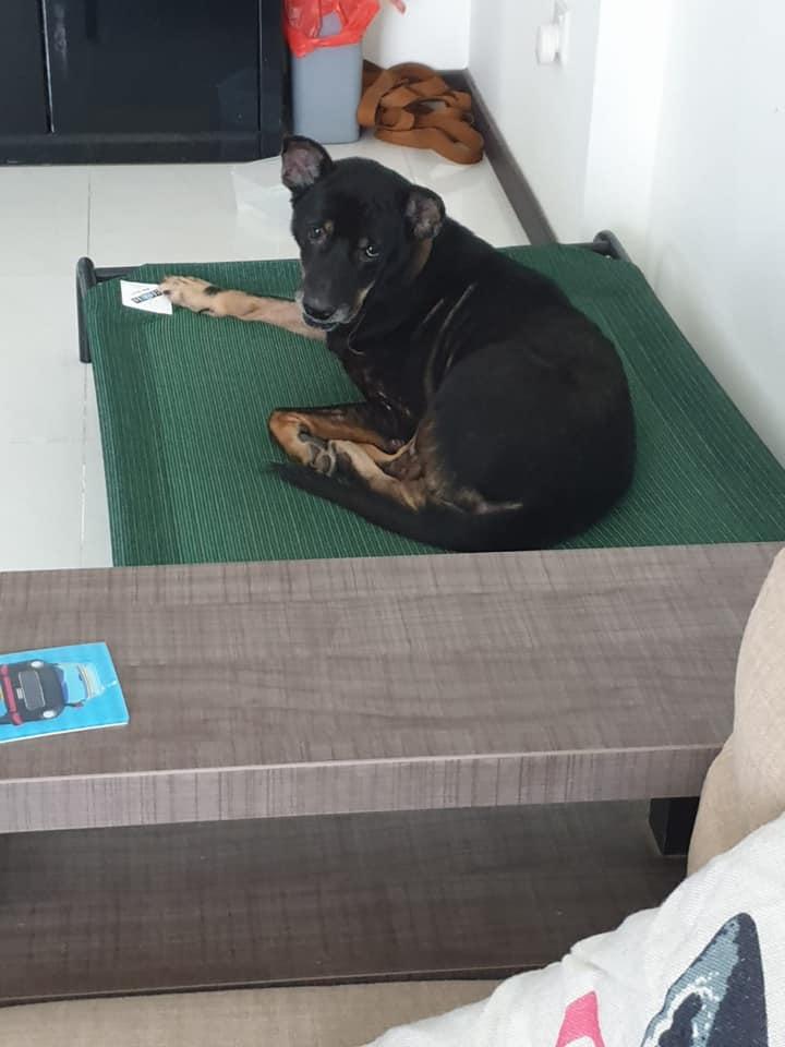 doggo home