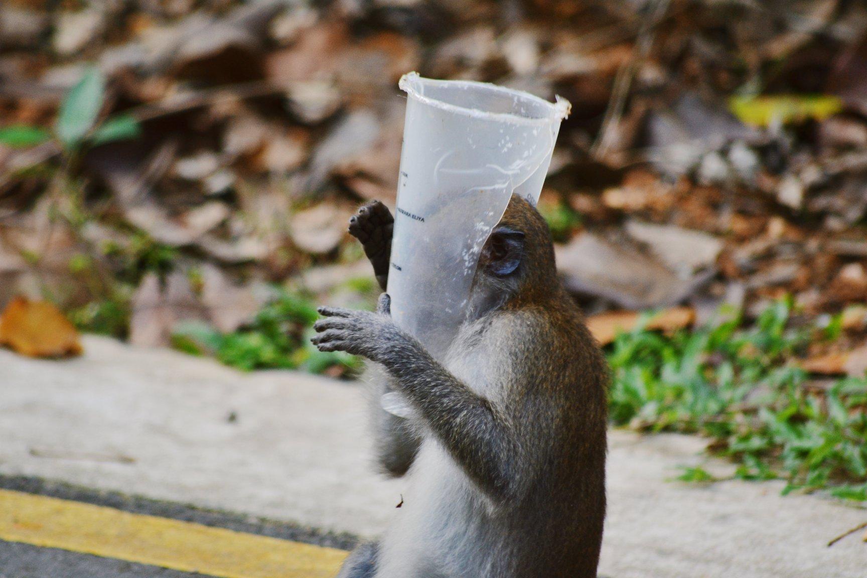 monkey bbt cup