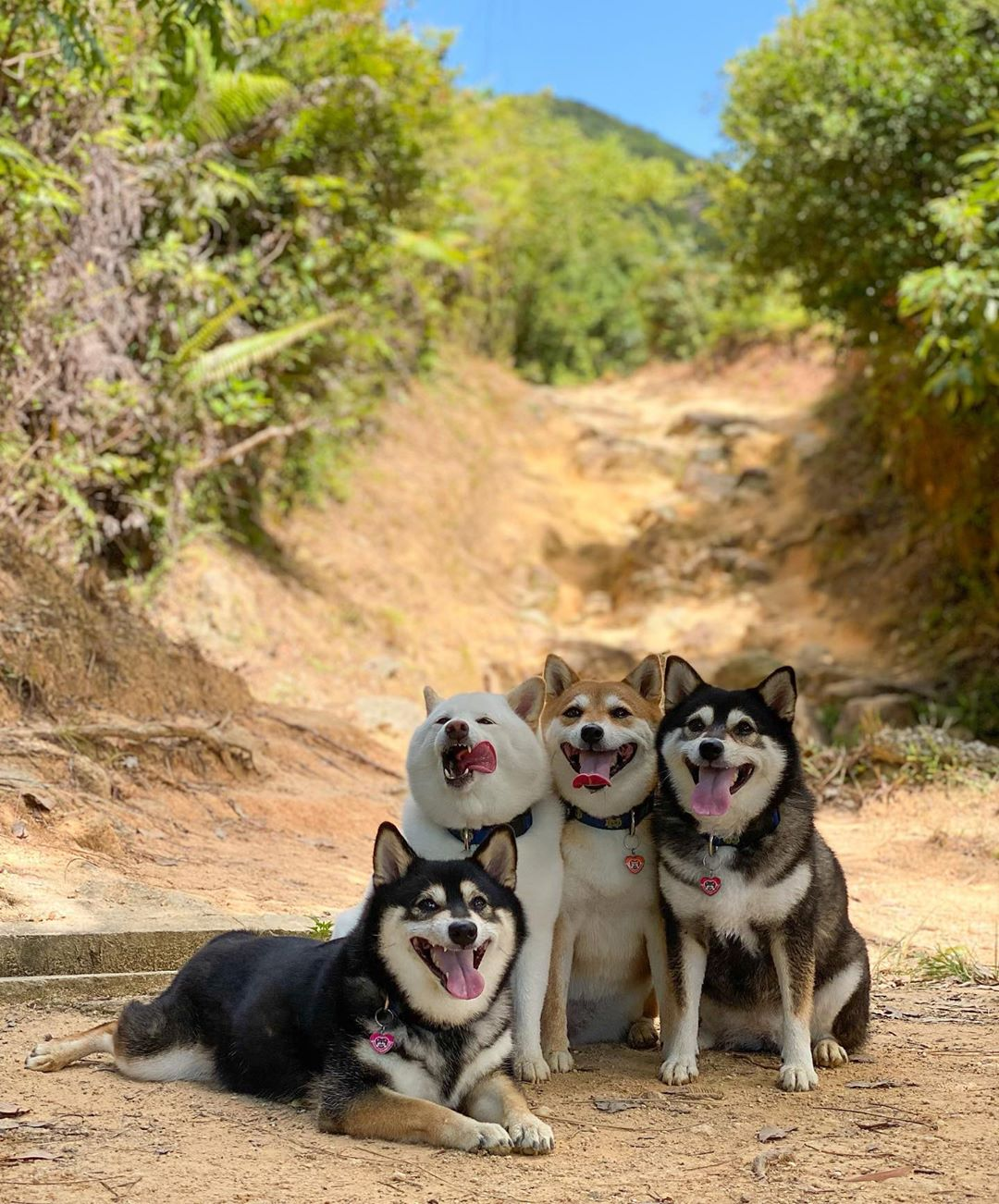 Unphotogenic doggo