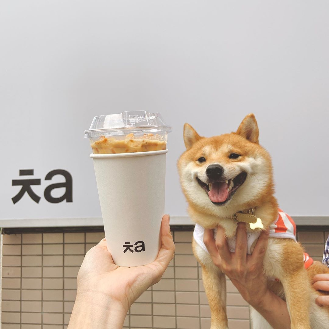Shiba Inu Smiling When He Sees Food Is A Major Mood For Foodies In S Pore