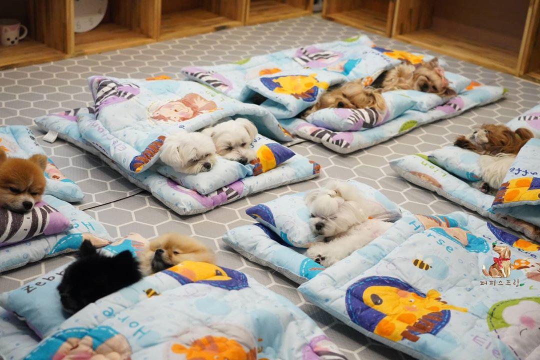 doggos sleeping