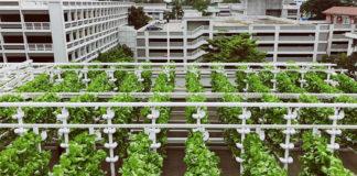 carpark vegetable farms
