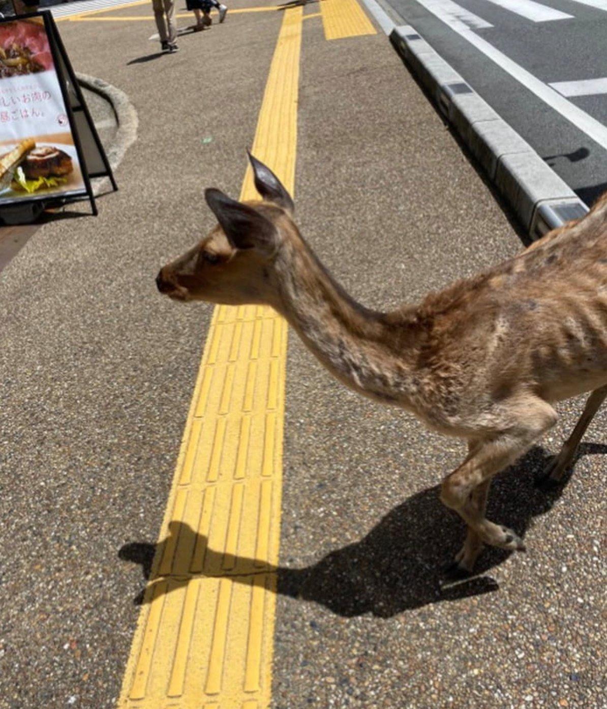 skinny deer 2