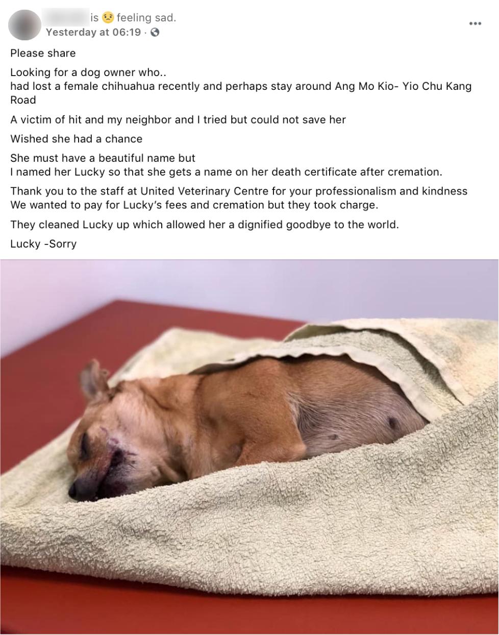 Chihuahua ang mo kio