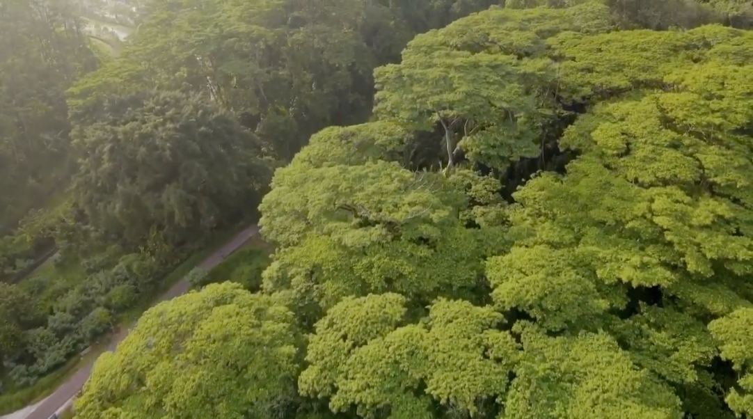 Clementi Forest trees