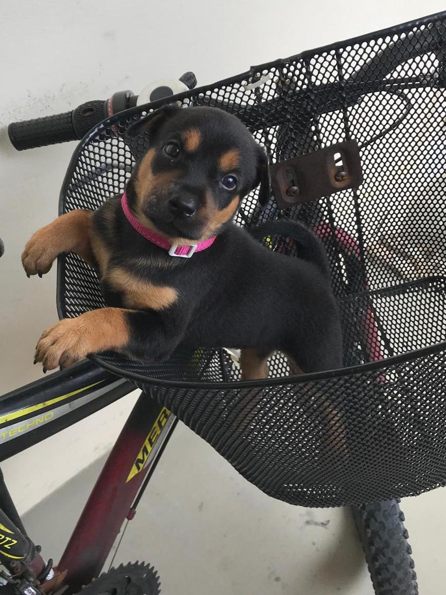 adorable puppies 2