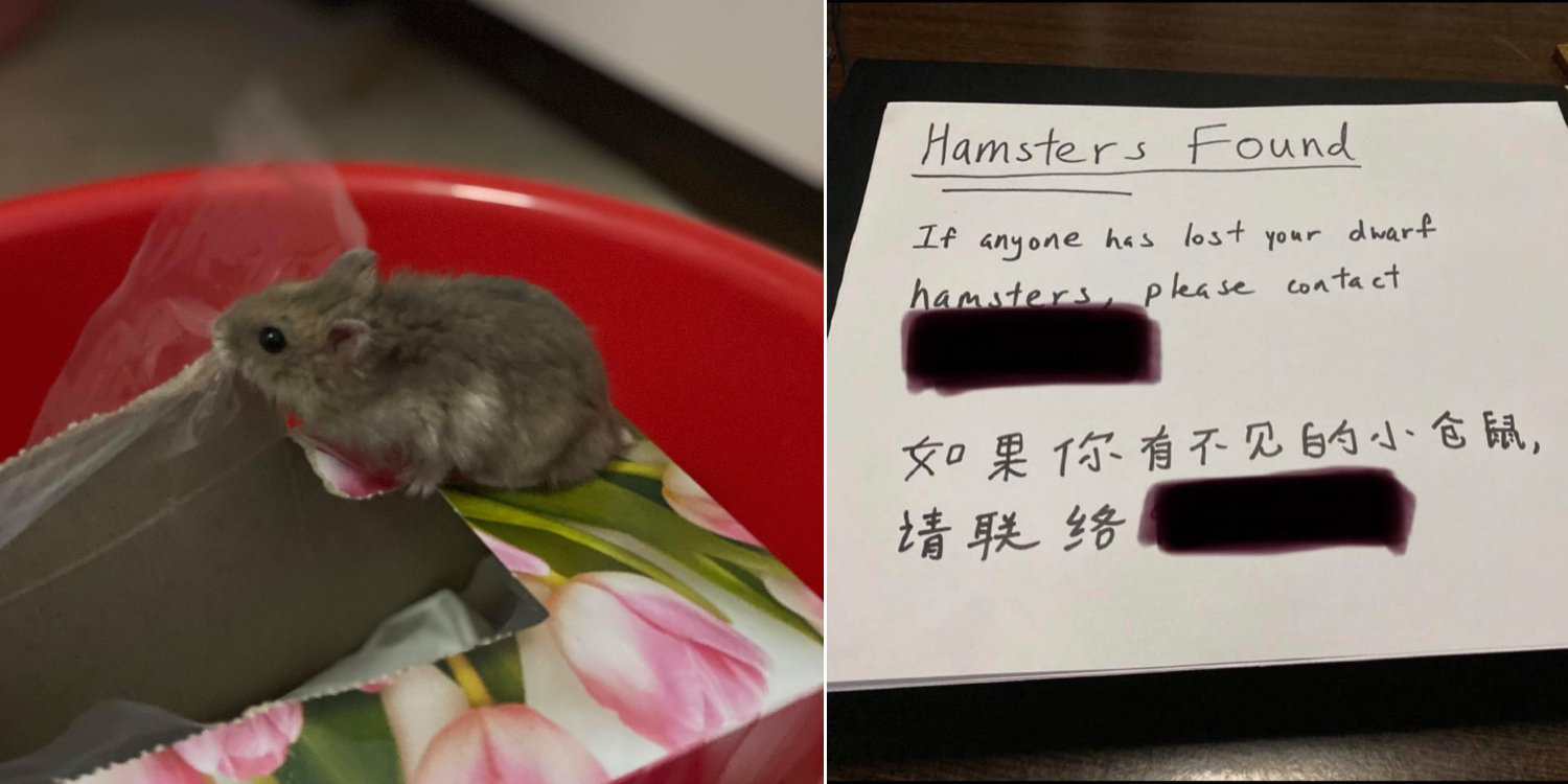 Cat In Chai Chee Brings 2 Live Hamsters Back As Gifts To Thank Owners For Adopting Her