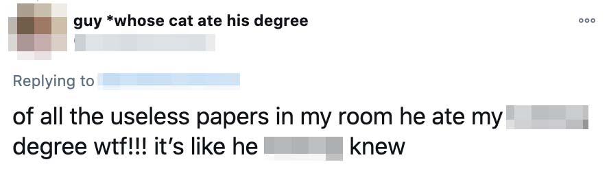 degree cat