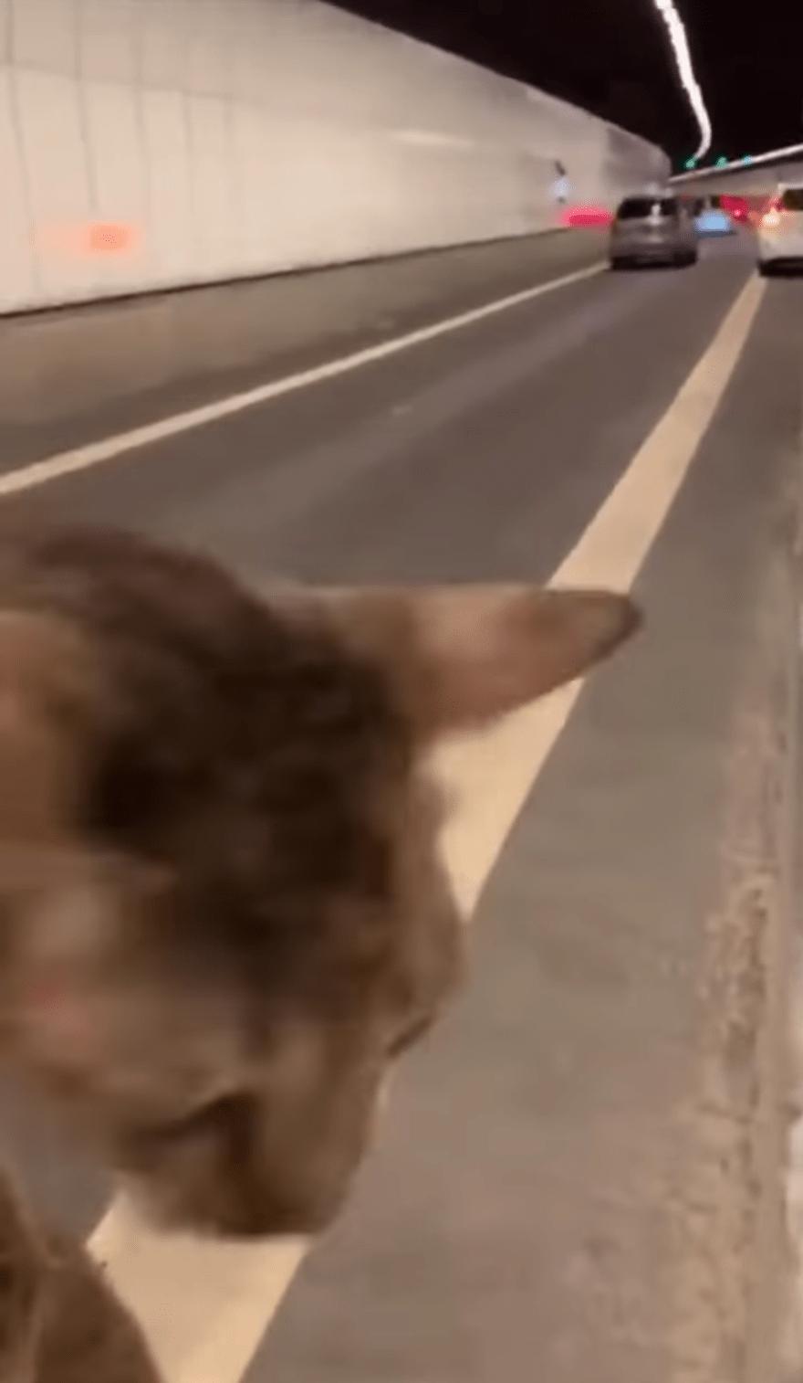 cat KPE Tunnel