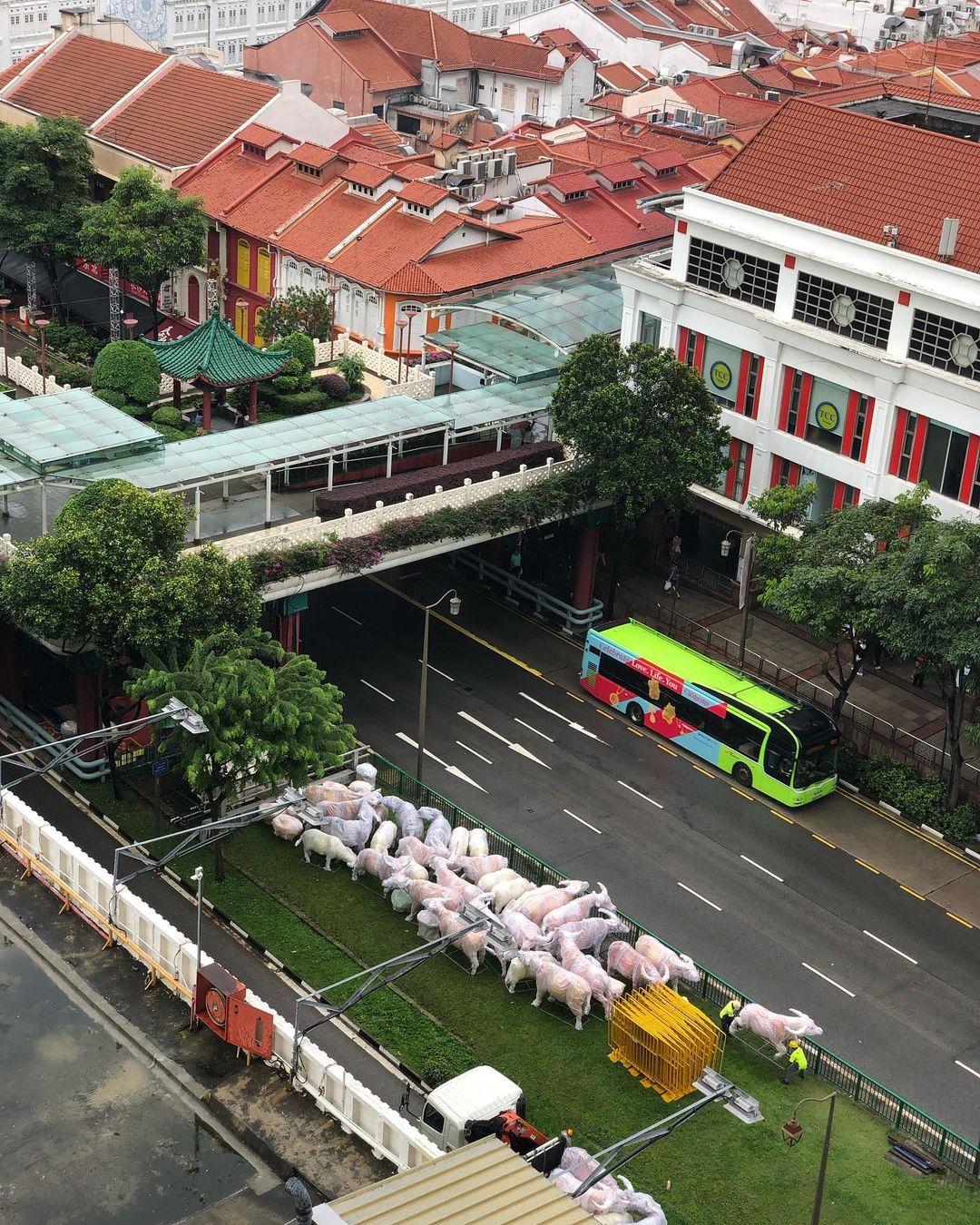 chinatown ox