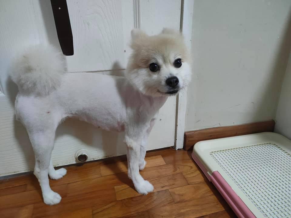 Owner groomer dog