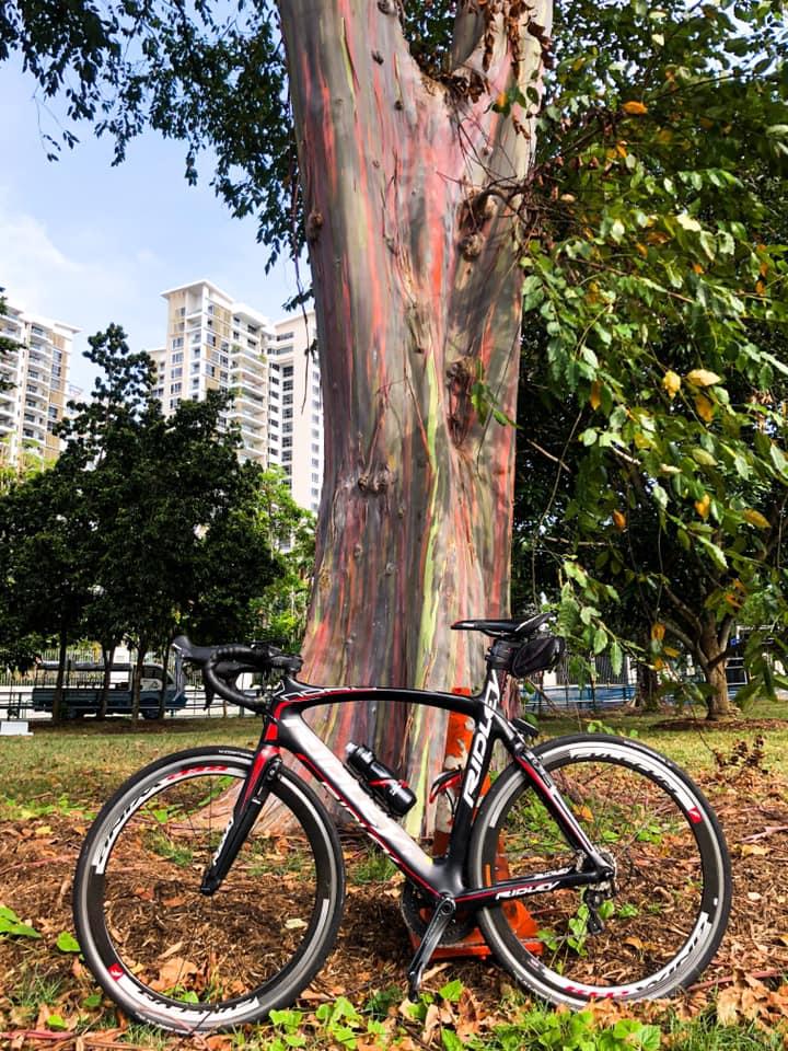 Tree Rainbow katong