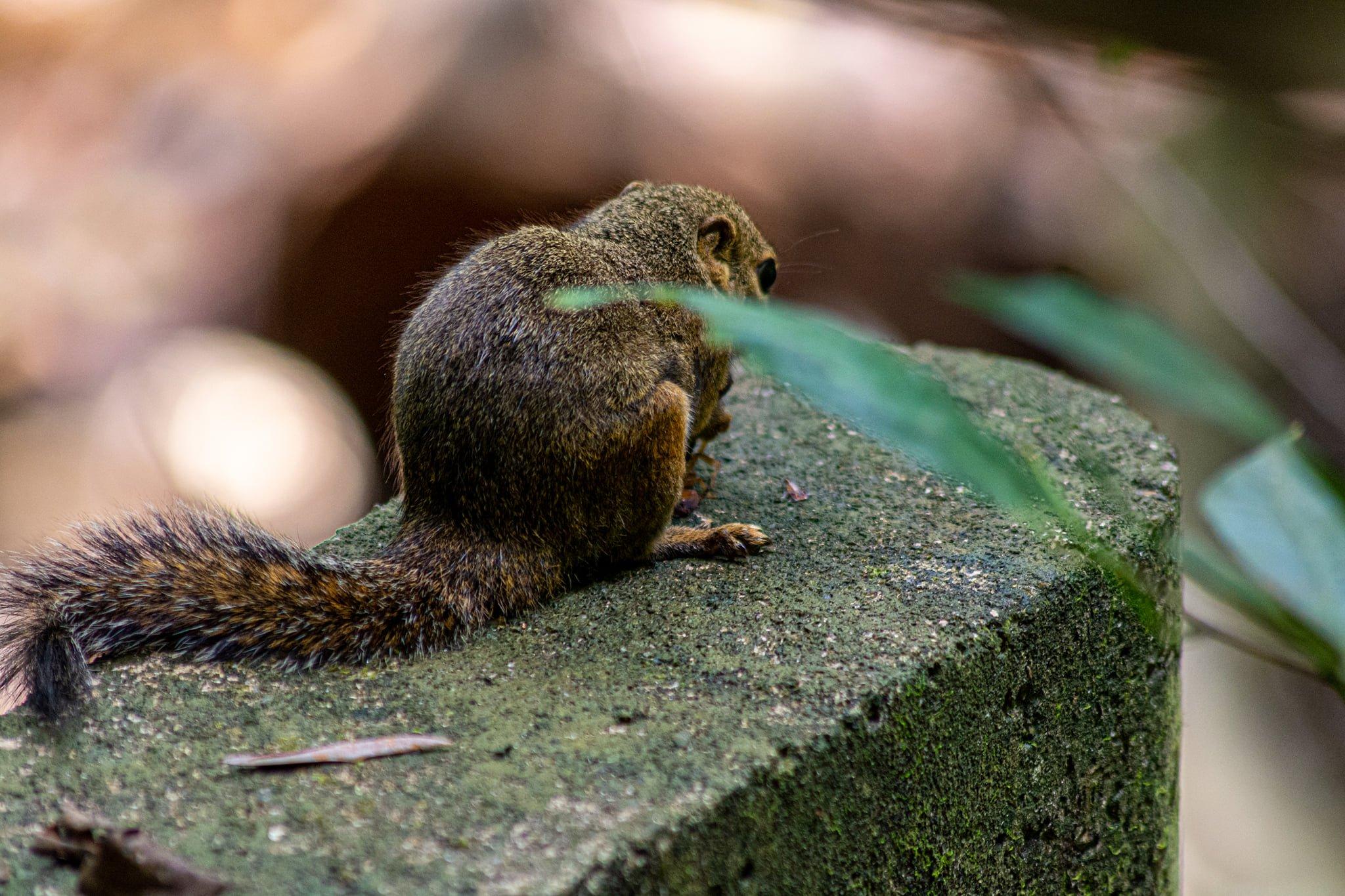 squirrel scorpion