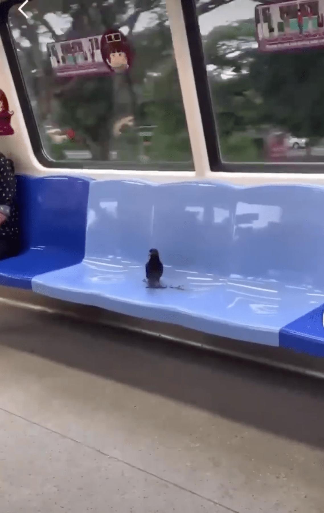 bird ride MRT