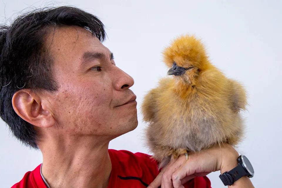 25 chickens HDB