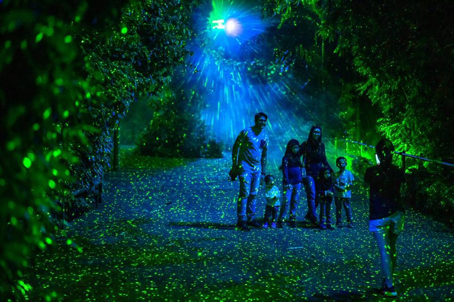 rainforest lumina 2