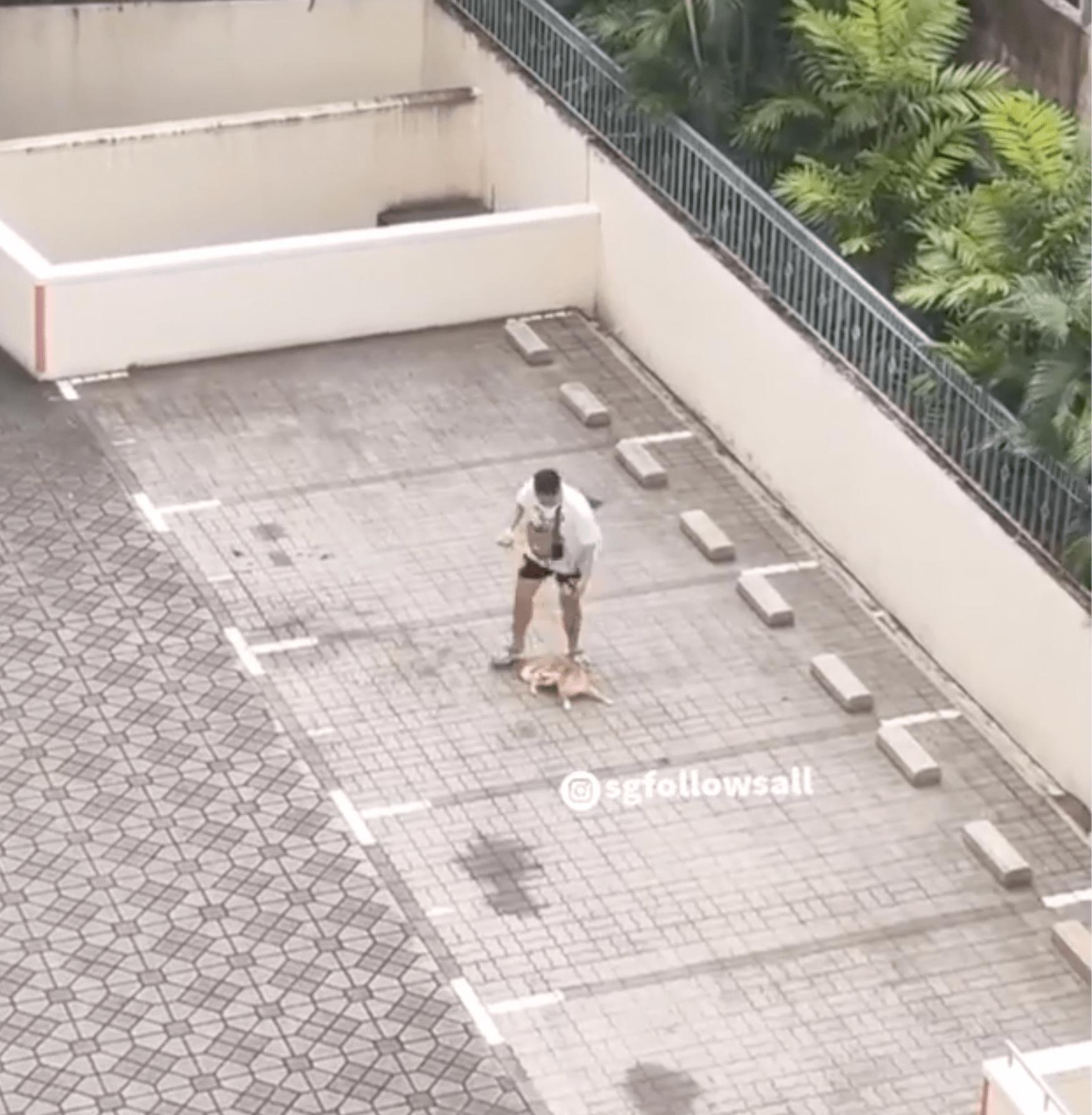 man dragging dog