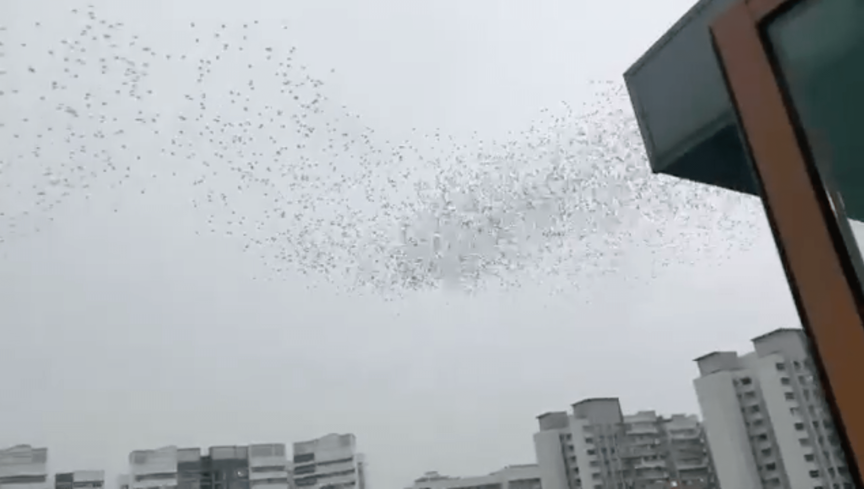 birds dance sengkang